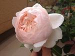 2014-05-19 15.30.19.jpg