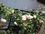 2014-05-29 11.38.35.jpg